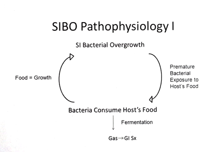 Patofizjologia SIBO