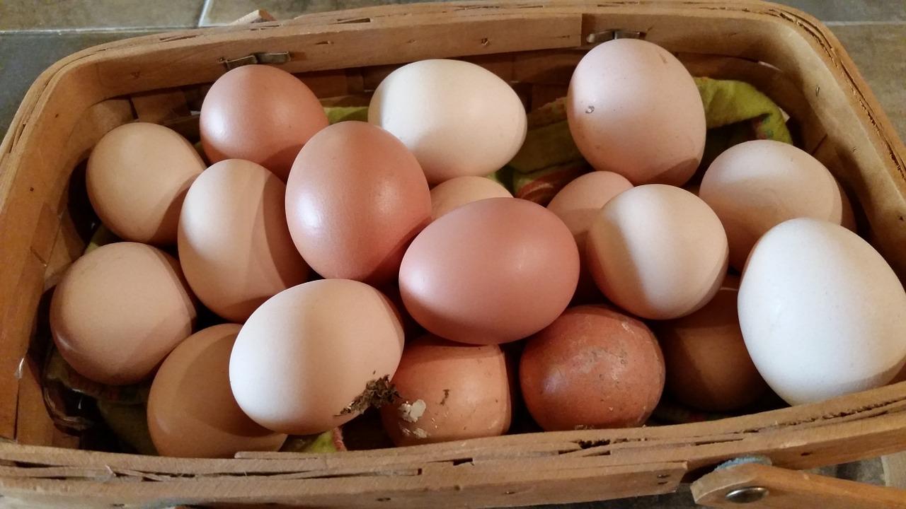 farm-fresh-623251_1280