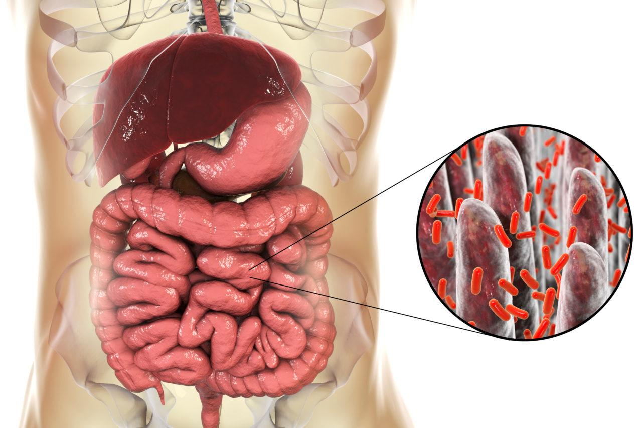 SIBO patogeneza