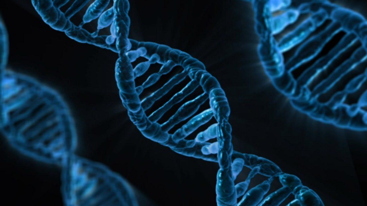 DNA jelita geny